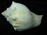 Shell 5