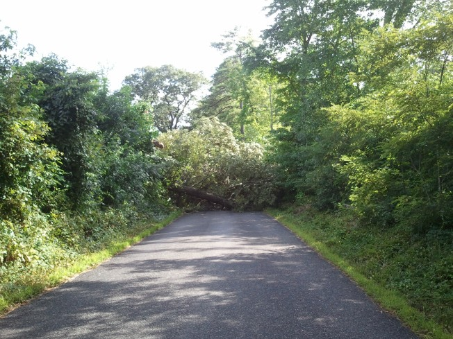Another tree in the road