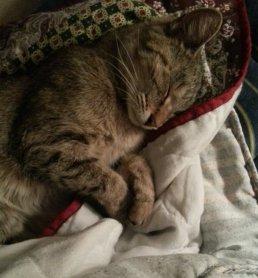 My Kitty 2
